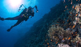 Take home the best moments of your dives with Filmplus